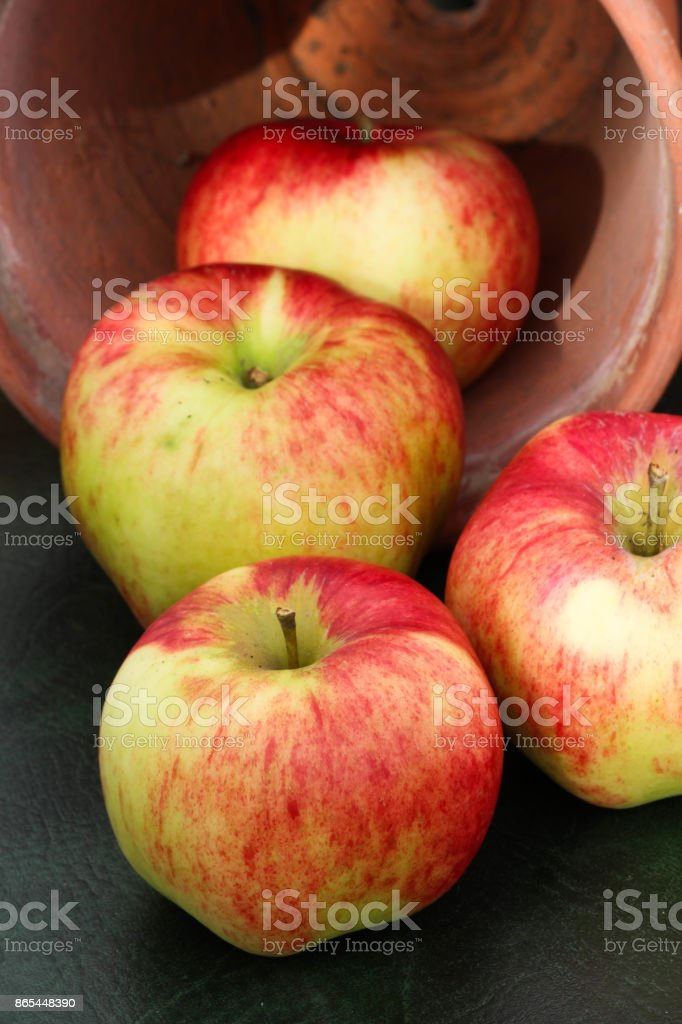 Jonagold apples in plant pot stock photo