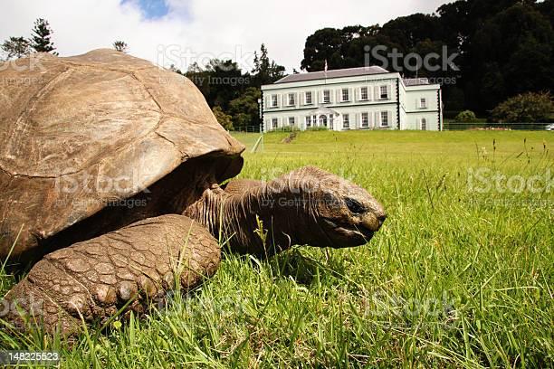Jonathan giant tortoise at plantation house island of st helena picture id148225523?b=1&k=6&m=148225523&s=612x612&h=s5oo0oxho5kikgquhus2lykipzdwuwzwbslnpfccafg=