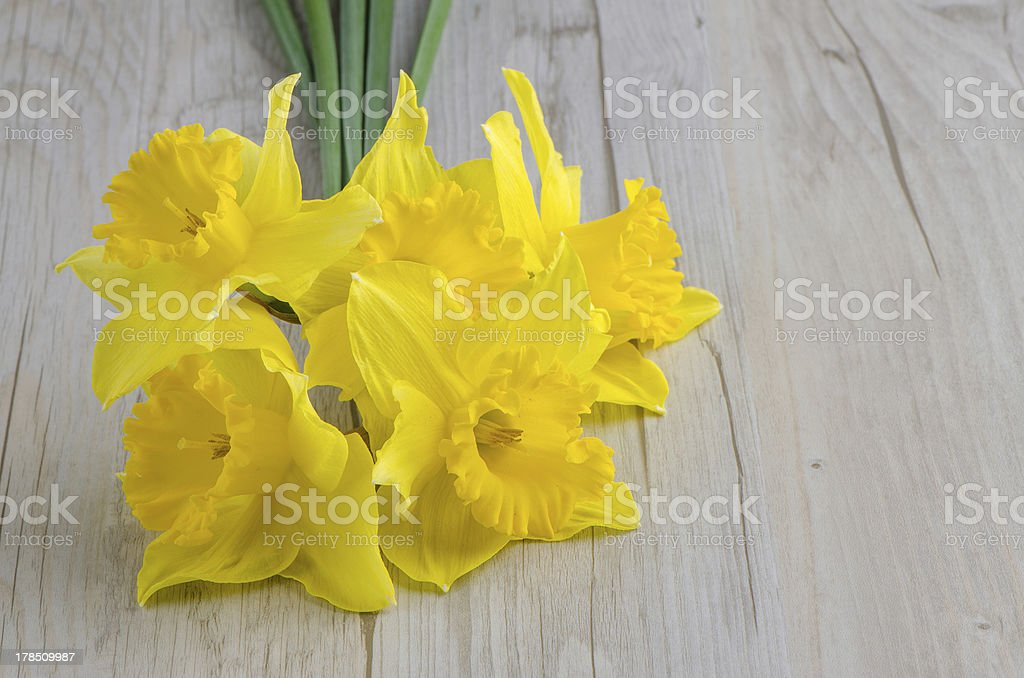 Jonquil flowers royalty-free stock photo