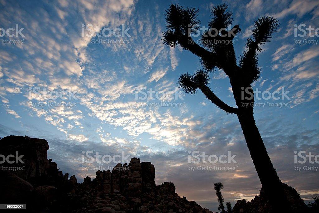 Fotografía de Joshua Tree Y Formación De Roca Encuadre Hermoso Cielo ...