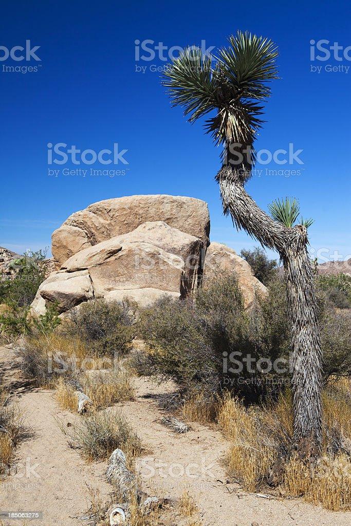 Joshua Tree and Rocks royalty-free stock photo