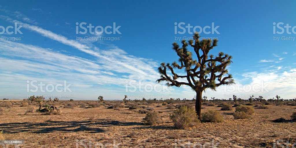 Joshua Tree cloudscape in Southern California high desert stock photo