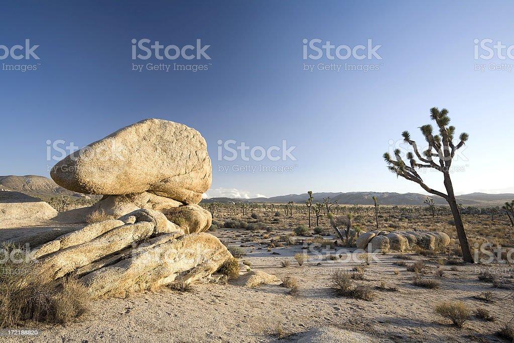 Joshua Tree, Desert and Rocks royalty-free stock photo