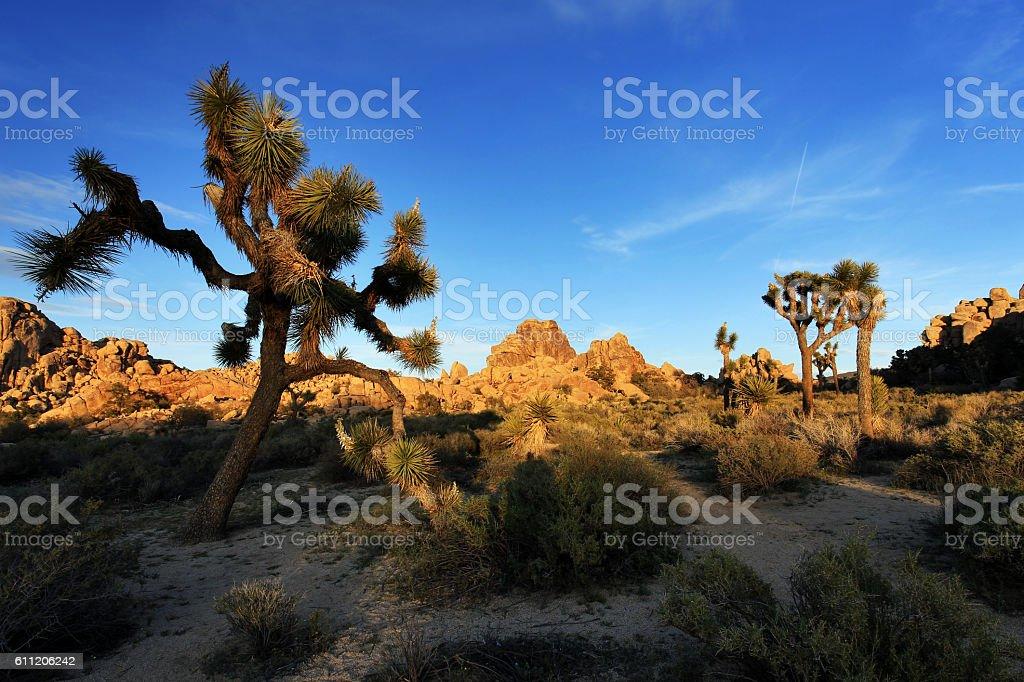 Joshua Tree National Park at Sunset, USA stock photo