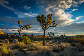 Beautiful landscape at Joshua Tree National Park in California. The park is a desert landscape that has, not only the familiar Joshua trees, but many varieties of shrubs, plants, boulders and scrub land. The park is also a popular place for rock climbing. California, southwest USA.