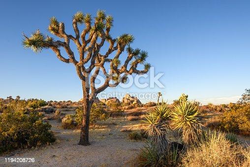 istock Joshua Tree National Park, Mojave Desert, California 1194208726