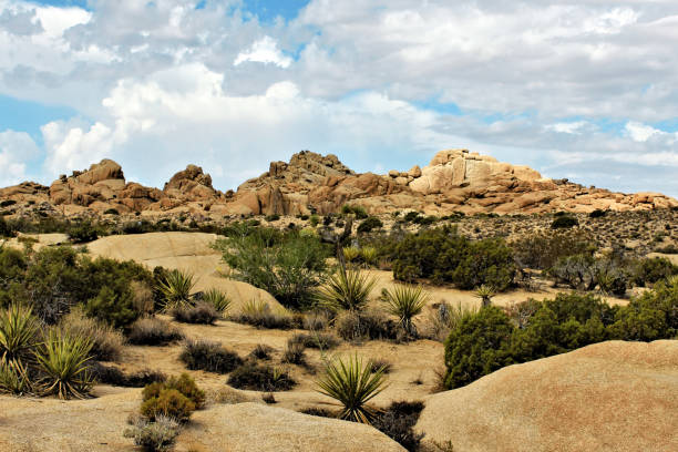 Joshua Tree National Park, Mojave Desert, California Amazing nature of the Joshua Tree National Park which is part of dry Mojave Desert in California. Lots of rocks and cacti. Perfect for hiking and climbing mojave desert stock pictures, royalty-free photos & images