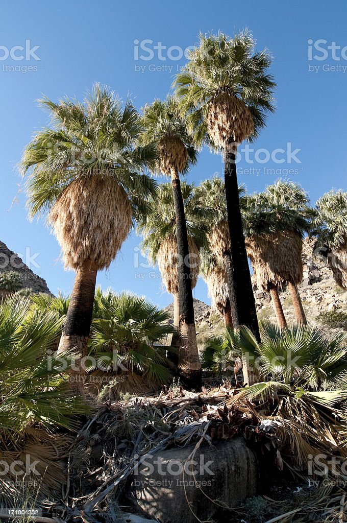 Joshua Tree National Park stock photo