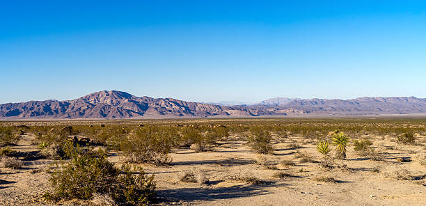 Joshua Tree National Park Panorama landscape in Joshua Tree National Park, California, USA mojave desert stock pictures, royalty-free photos & images