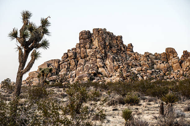 joshua tree national park - nzgmw2017 stock pictures, royalty-free photos & images