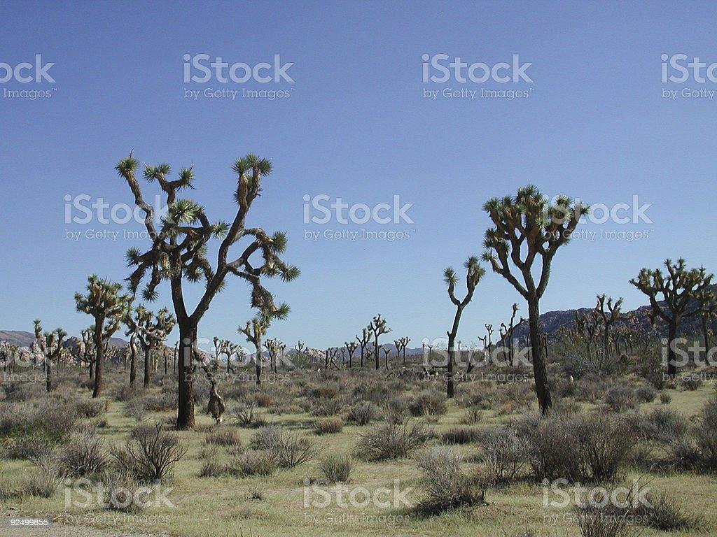 Joshua Tree National Park royalty-free stock photo