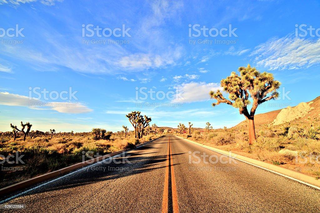 Joshua Tree National Park, USA stock photo