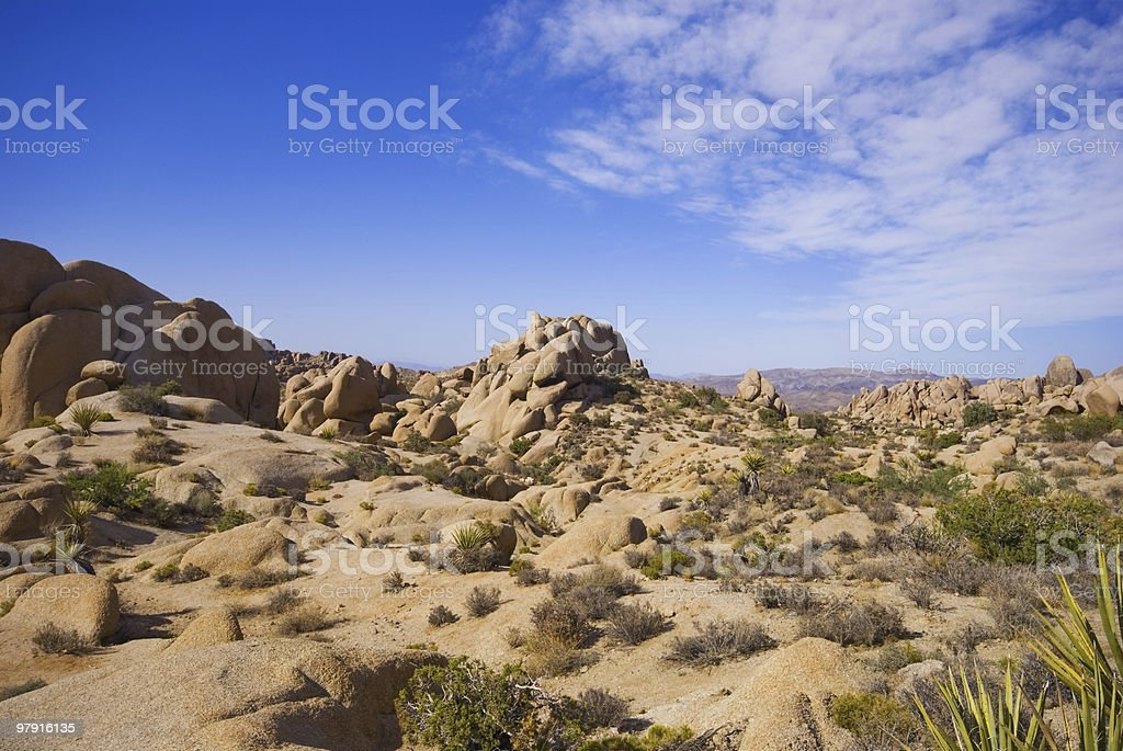 Joshua Tree NP royalty-free stock photo