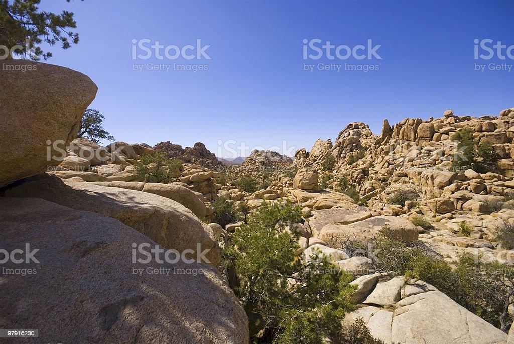 Joshua Tree NP royalty-free stock photo