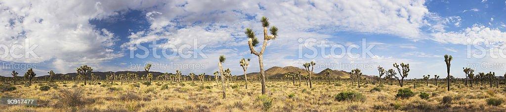 Joshua Tree Panorama stock photo