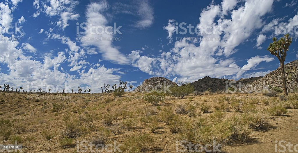 Joshua Tree Panorama royalty-free stock photo