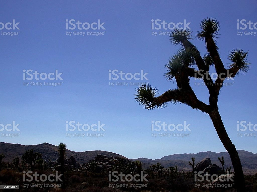 Joshua Tree stock photo