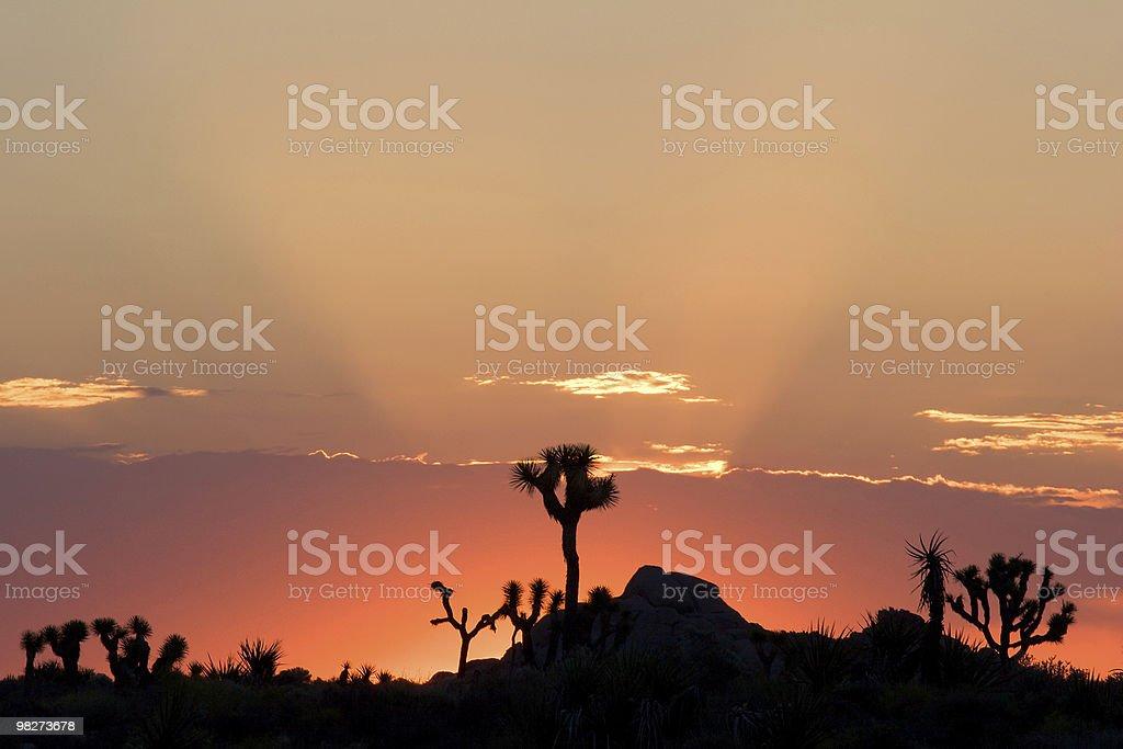 Joshua Tree Sunrise Silhouette royalty-free stock photo