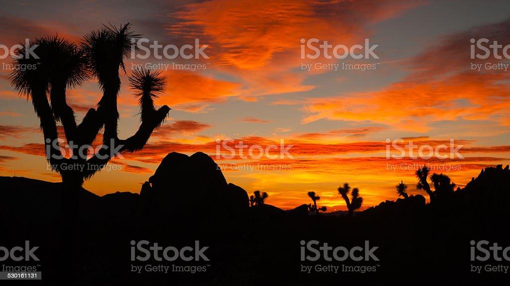 Joshua Tree Sunset Cloud Landscape California National Park stock photo