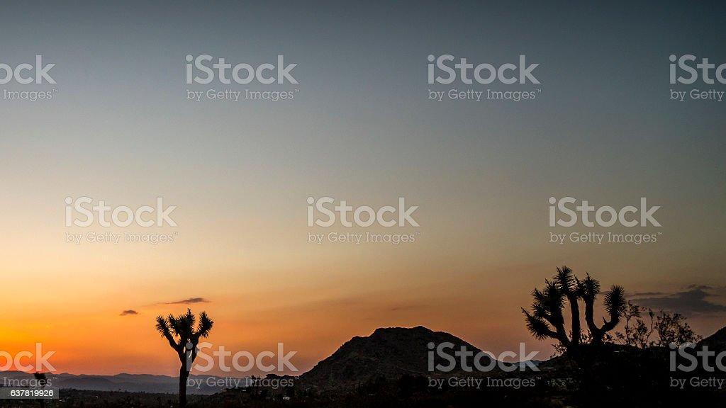 Joshua Tree sunset stock photo