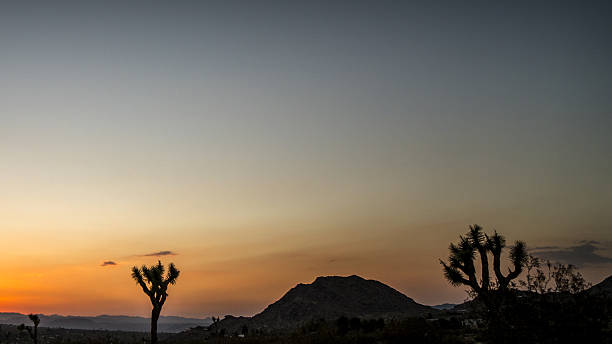 joshua tree sunset - nzgmw2017 stock pictures, royalty-free photos & images