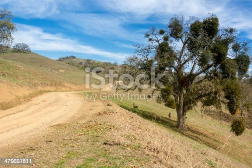A dirt road leads into the cattle grazed foothills above eastern San Jose California in Santa Clara County as a pair of deer look on under a blue oak