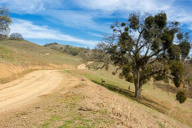 voyage pour les collines - réserve naturelle photos et images de collection