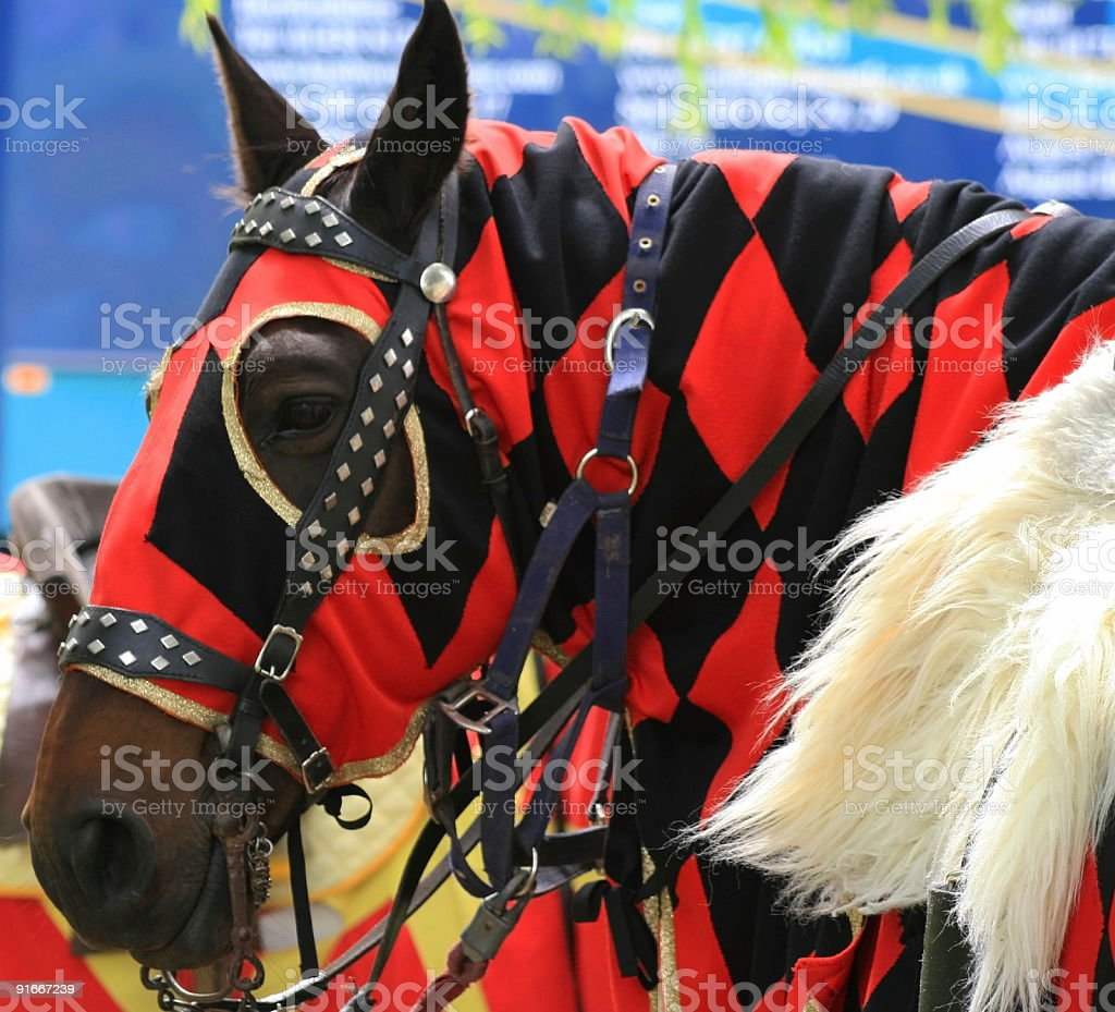 Jouster's Horse royalty-free stock photo