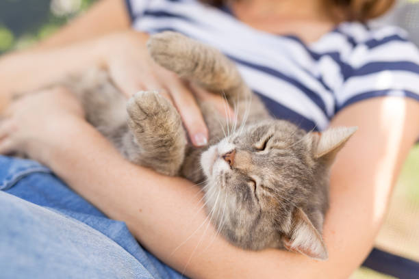 Joy of being cuddled stock photo