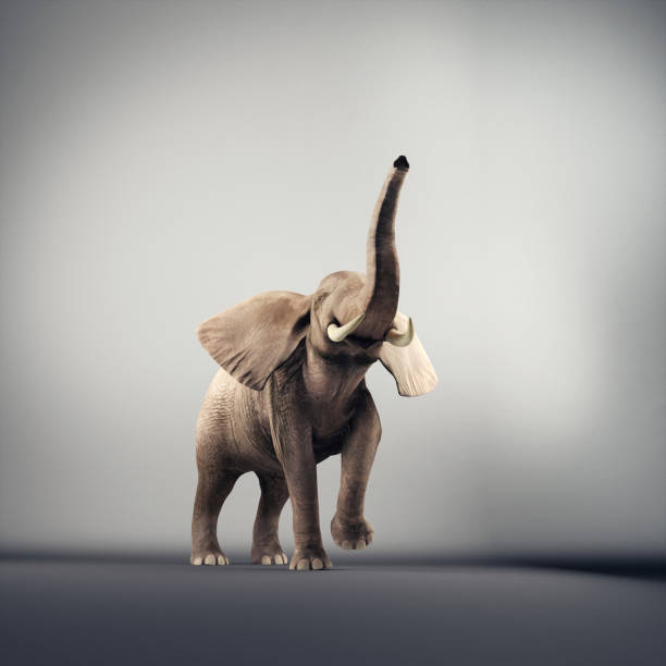 Joyful elephant in a studio. 3d render Joyful elephant in a studio. 3d render animal trunk stock pictures, royalty-free photos & images