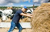 joyful farmer on a farm among cows pushes a hay
