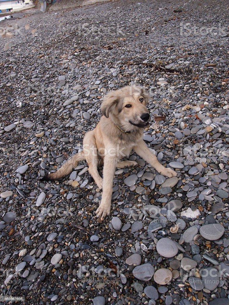 Joyful puppy stock photo