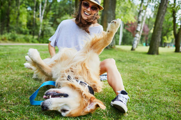 joyful young woman playing with her dog outdoors in the park - stomach sitting stock photos and pictures