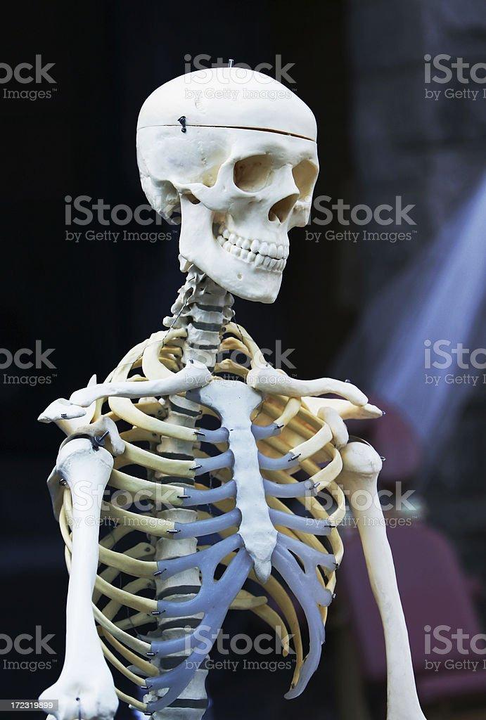 Joyous skeleton! royalty-free stock photo