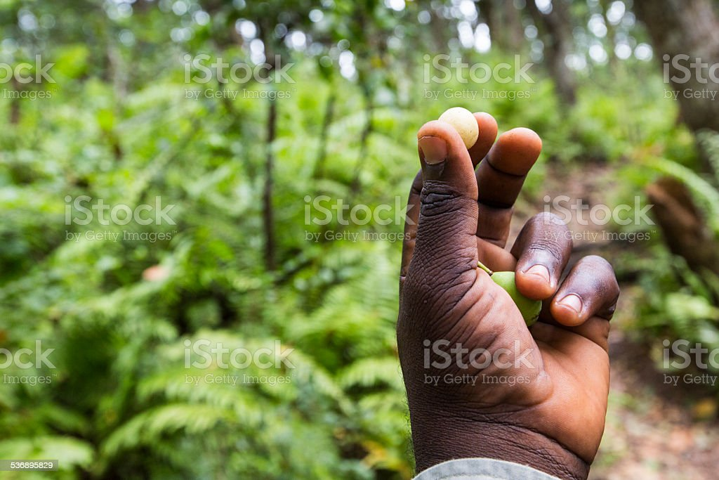 Jozani Forest, Zanzibar, Tanzania stock photo