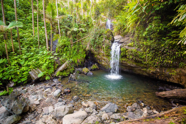 Juan Diego Falls at el Yunque rainforest Puerto Rico stock photo