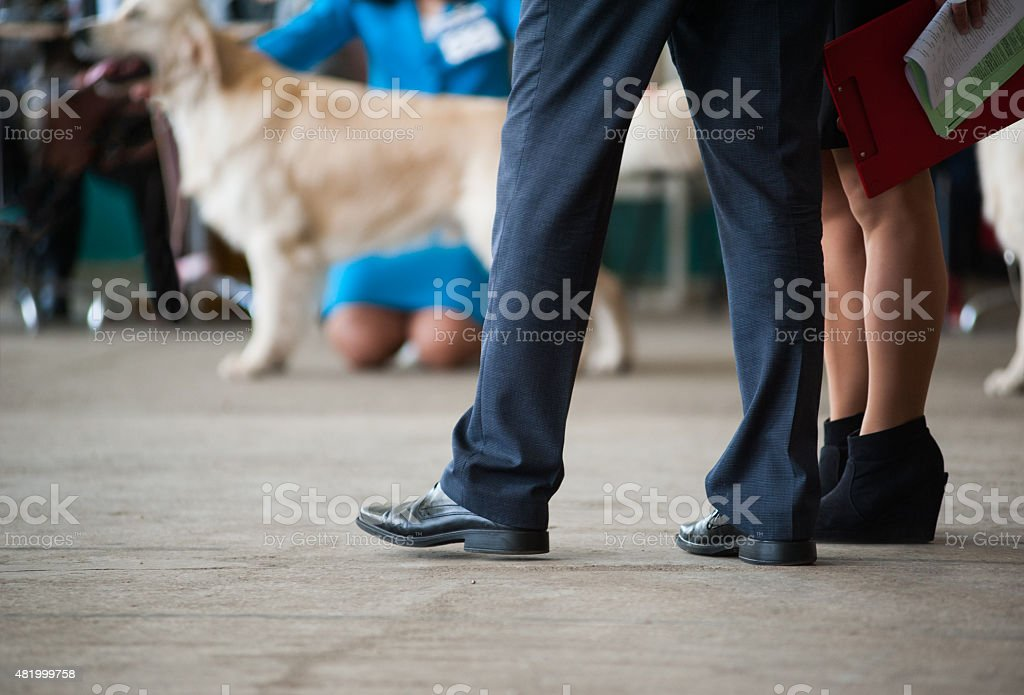 Judges at a dog show stock photo