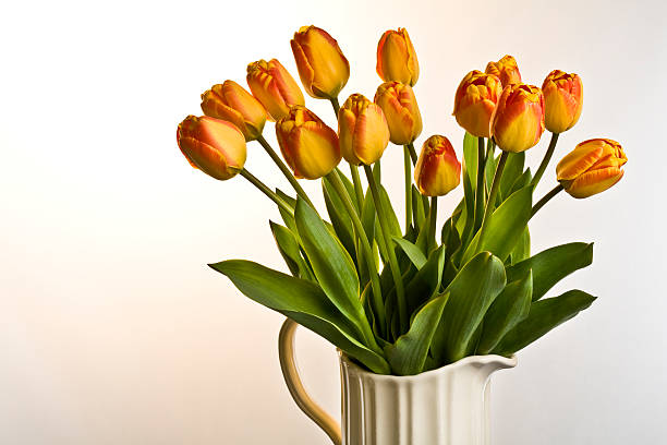 Jug of tulips stock photo