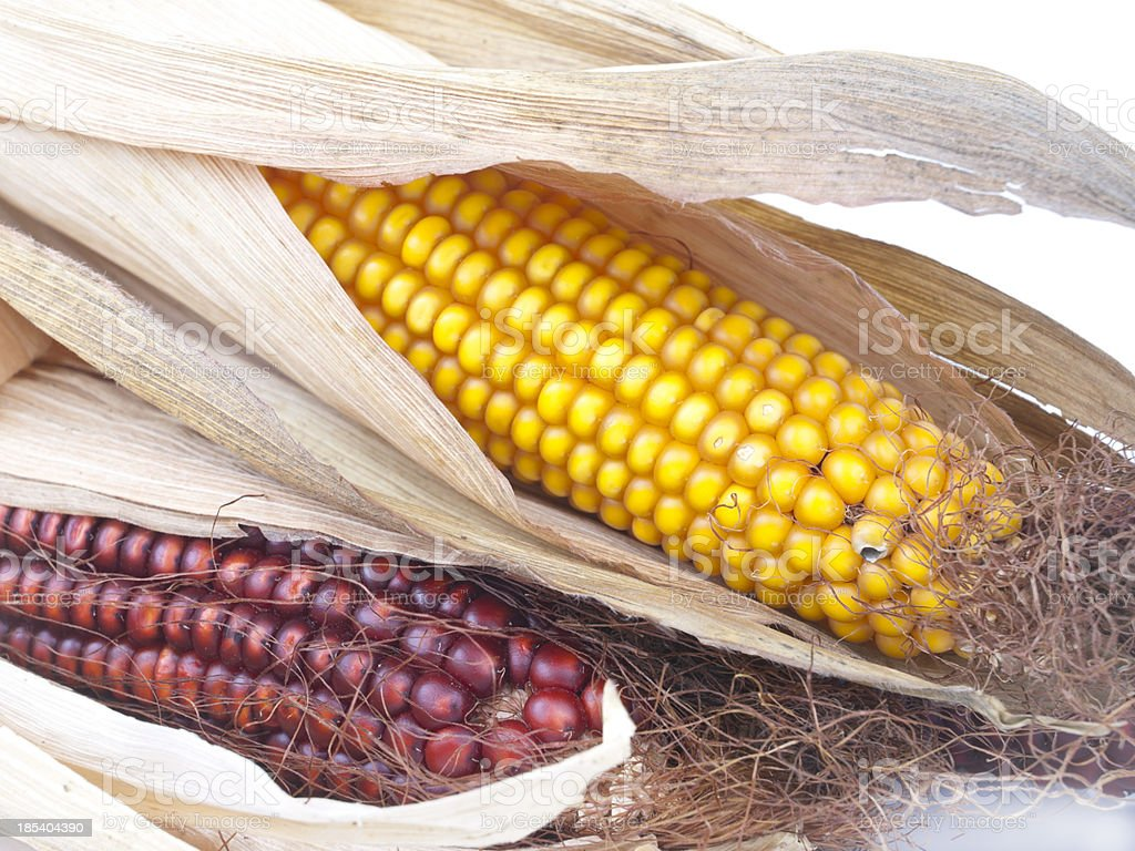 Juicy and ripe red and yellow corn cobs royalty-free stock photo