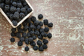 Wooden basket on the table full of fresh picked Blackberries