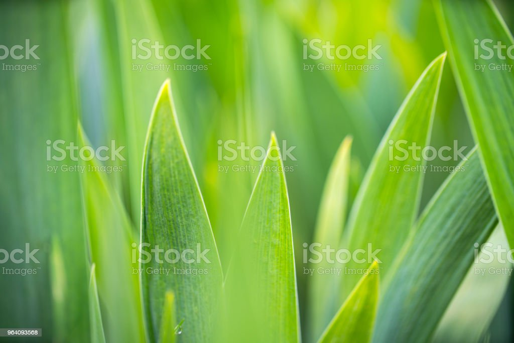 Juicy green background - Royalty-free Beauty In Nature Stock Photo