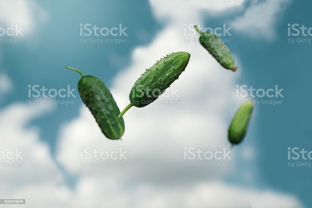 juicy green cucumbers tossed the air stock photo