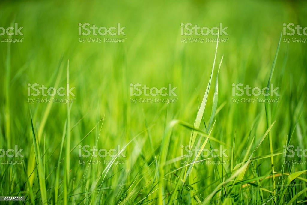 多汁綠草 - 免版稅俄羅斯圖庫照片