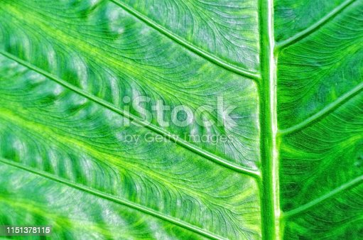 Juicy green leaf closeup. Macro photo texture. Green natural background.