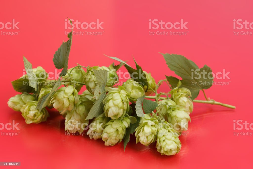 Juicy hop isolated on red stock photo