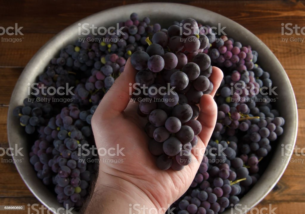 Juicy red grapes in hand on wooden background stock photo