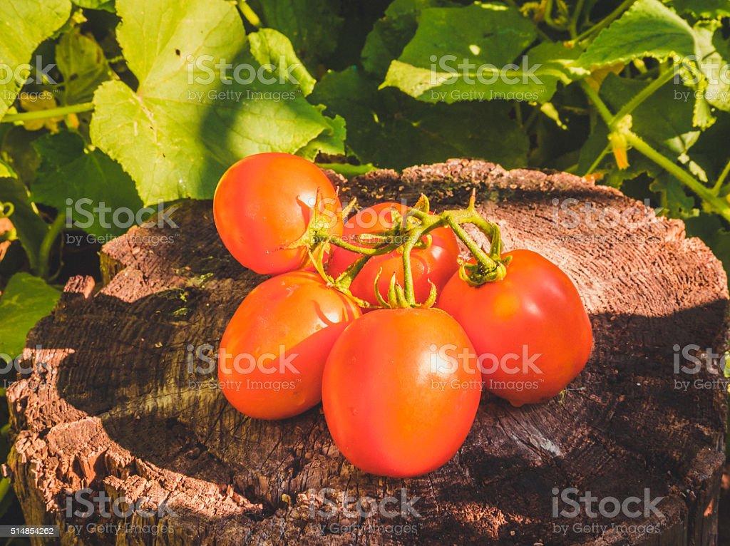 Juicy ripe tomato stock photo