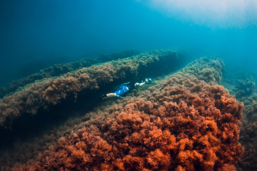 istock July 30, 2019. Anapa, Russia. Underwater photographer with camera glides stones with seaweed in blue sea 1195379940