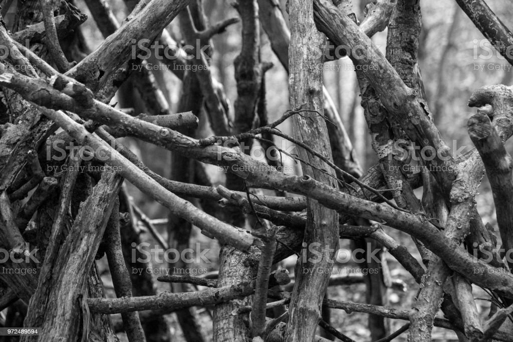 Jumble of twigs in black and white stock photo