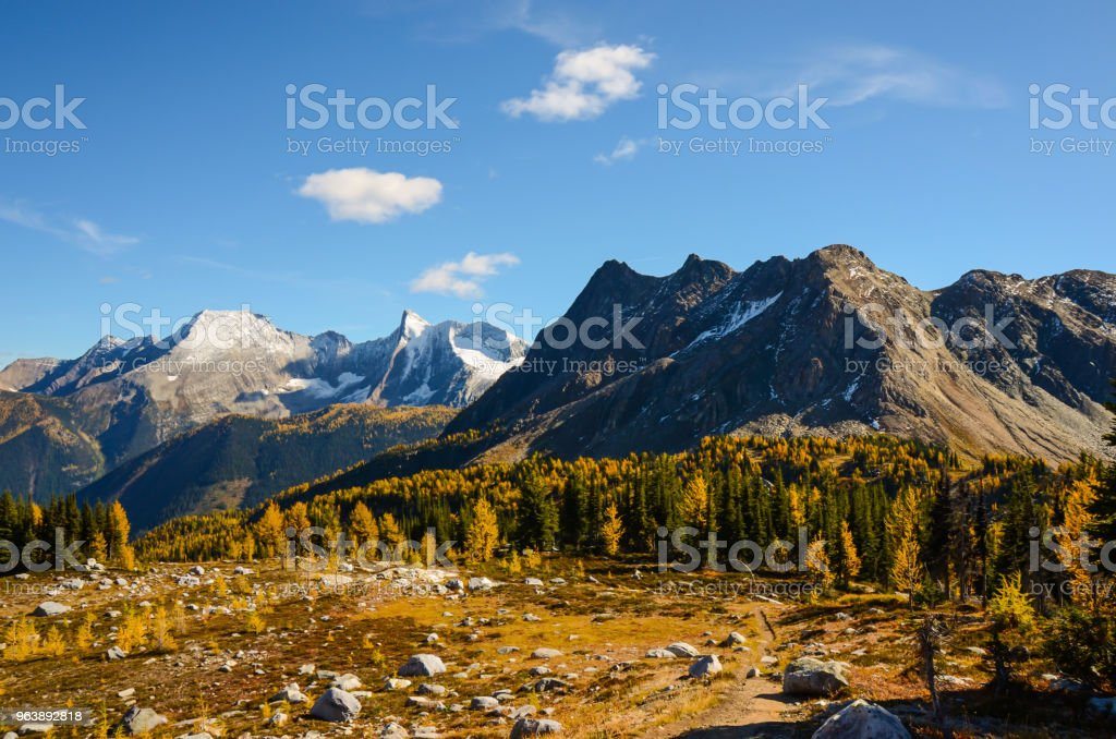 Jumbo Pass British Columbia Canada in Fall with Larch - Royalty-free Autumn Stock Photo